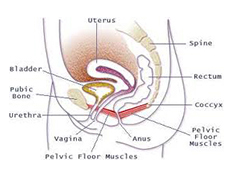 ... Including A Good Urologist, Urogynecologist, Gynecologist, And Physical  Therapist Who Specialize In Pelvic Floor Rehab And Pain Treatment.