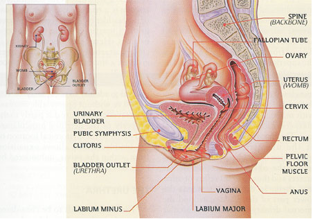 Pictures of a womens anus